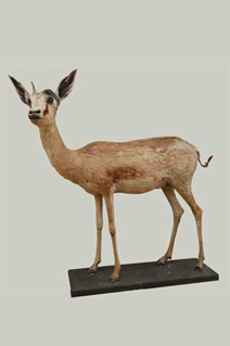 Taxidermy Pretoria