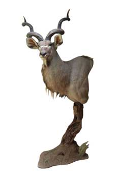 Magnum Taxidermy Pedestal Mounts